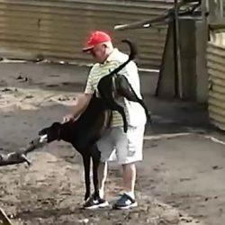 """Il """"Greyhound blooding"""" in Irlanda, ovvero il cosiddetto """"BATTESIMO di SANGUE"""""""