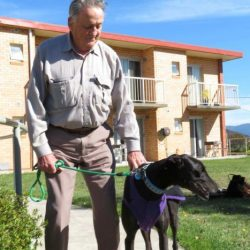 Australia: due greyhound ex racer adottati da una casa di cura per anziani…tutti li adorano!