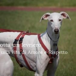 Galgos adoption day – 27 maggio 2017
