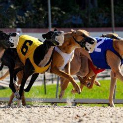Lo stato del West Virginia contro il dog racing – Il Senato ha abolito finanziamenti milionari
