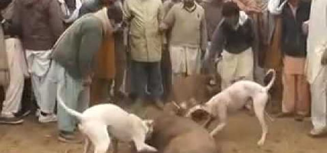 Please sign and share 'Stop the Export of Irish Greyhounds to Pakistan' by Ban Bloodsports