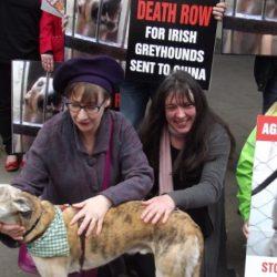 Pauline McLynn tra gli attivisti che hanno partecipato alla protesta contro le esportazioni dei levrieri irlandesi