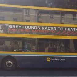 50 Bus contro l'esportazione dei greyhound irlandesi per le strade di Dublino