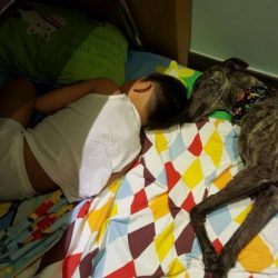 Garlic – the survival race dog from the Canidrome in Macau
