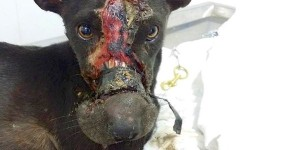 Please sign and share all the petitions about dog and cat