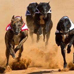 Dog Racing: errori del passato. Le denunce contro il Canidrome non sono solo recenti.