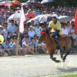 Vietnam nuova frontiera di investimento per il business delle corse coi greyhound e i cavalli.