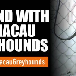 How to save the 650 greyhounds of the Macau Canidrome – The international campaign 'Save the Macau Greyhounds'.