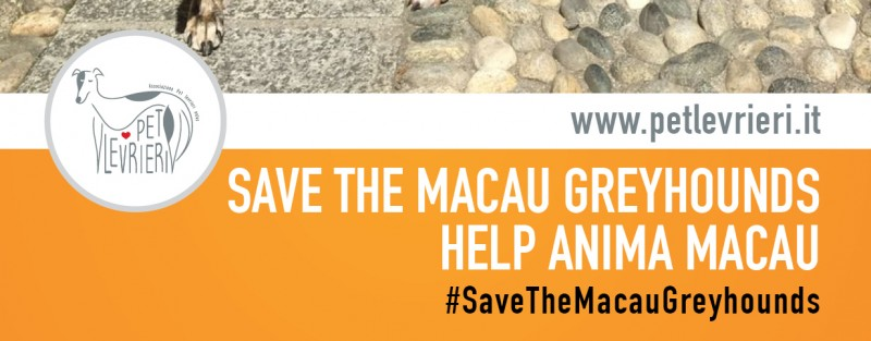 Italian VIPs stand with the Macau Greyhounds | Pet Levrieri Onlus - Salva e adotta un levriero