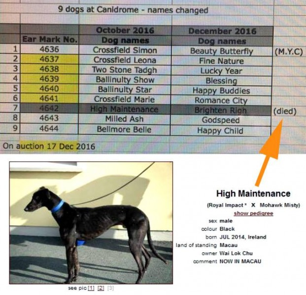 How to save the 650 greyhounds of the Macau Canidrome - The