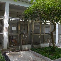 IACM chiede ufficialmente al Canidrome di rivelare i suoi piani per i greyhound