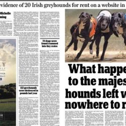 20 Grey irlandesi, ex campioni, venduti in Cina e sfruttati per la riproduzione