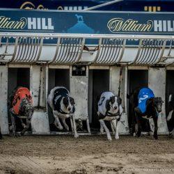 L'industria racconta che ai greyhound piace correre, ma confonde LA corsa con LE corse!