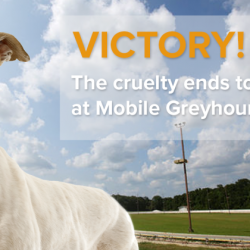 Alabama – Il Mobile Greyhound Park chiuderà i battenti!