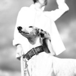 I greyhound e lurcher in adozione – Arriveranno in Italia il 10 marzo 2018