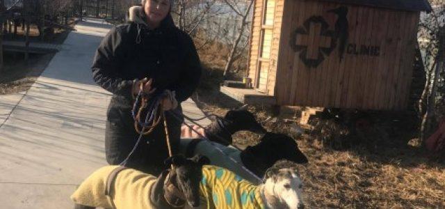 Il nostro impegno per i GREYHOUND CINESI, salvati dalle corse clandestine e dall'orribile mercato della carne di cane