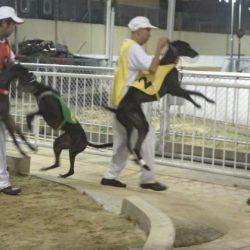 Il South China Morning Post denuncia nel 2011 gli orrori del Canidrome: muoiono 30 cani al mese, uno ogni giorno.