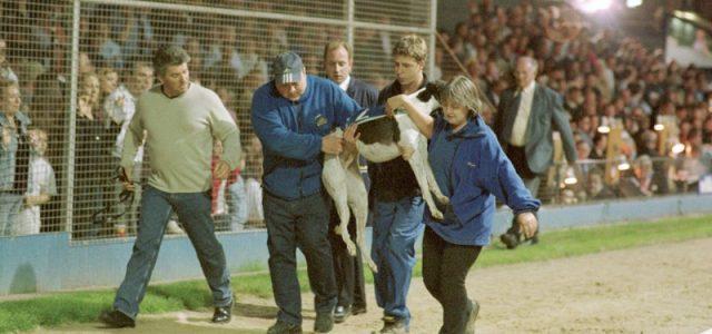 Barry Stanton, direttore di cinodromo: Le corse sono pericolose, i cani possono morire, molti saranno soppressi, e allora?!