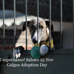 Galgos Adoption Day – 25 Novembre 2017