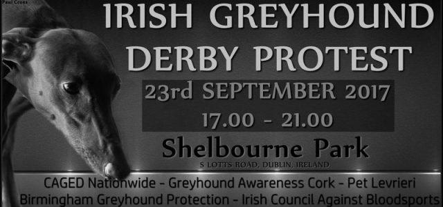 Protesta internazionale CONTRO il Greyhound Racing, Dublino, 23 settembre. Unitevi a noi!