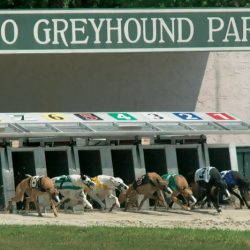 FLORIDA : EBRO — More dogs perished this year in a single month of racing at Ebro Greyhound Park than died during the entire 2016 racing season