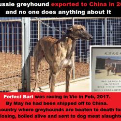 Nel 2017 Perfect Bart è stato esportato dall'Australia in Cina. Com'è possibile?