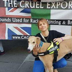 Firmate e diffondete la PETIZIONE CONTRO le ESPORTAZIONI di greyhound a fini commerciali