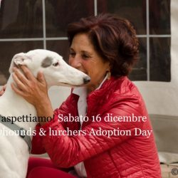 Greyhounds&Lurchers Adoption Day – 16 dicembre 2017