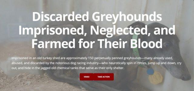 Texas: 150 greyhound ex racer, orribilmente imprigionati, tenuti in vita esclusivamente per donare sangue.