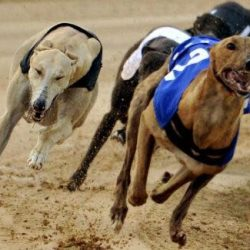 Clonbrien Hero, the dog at the centre of a recent cocaine scandal is to race again in Limerick on Saturday night!