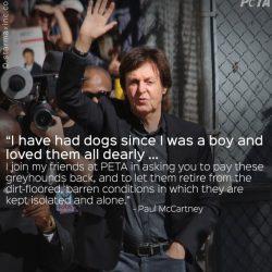 Paul McCartney in campo a favore dei greyhound detenuti nella banca del sangue in Texas