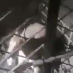 Fermate l'esportazione di greyhound in Pakistan! Scrivete all'aeroporto di Manchester e alla Pakistan International Airlines
