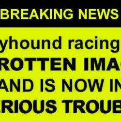 I numeri e l'attuale immagine – corrotta e disgustosa – del Greyhound Racing