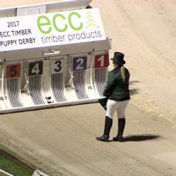 """""""ECC timber """" è una società SCANDALOSA perché contribuisce, con la sua sponsorizzazione, alle CRUDELTA' dell'evento """"Puppy Derby"""""""
