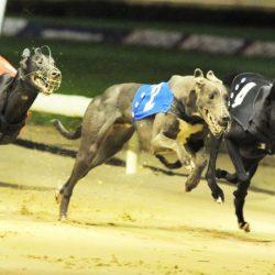 GBGB (Greyhound Board of Great Britain) MULTA ALCUNI TRAINER PER £ 9,000