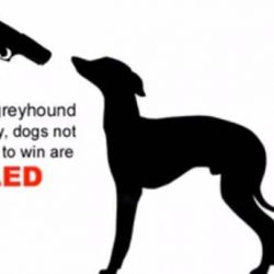 Nel greyhound racing i grey non abbastanza veloci VENGONO UCCISI SENZA PIETA'