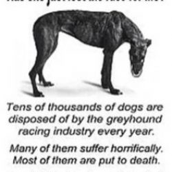 Killed and dumped: Victims of Ireland's cruel greyhound industry