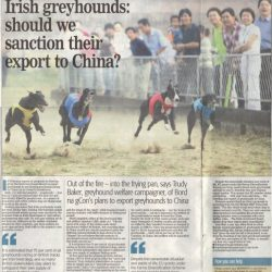 Already in 2011 IGB planned to export Irish greyhounds, invest in, and develop, racetracks in China.