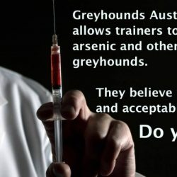 Greyhounds Australasia and drugs