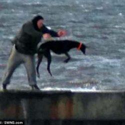 Immagini scioccanti mostrano un greyhound gettato nel mare gelido e mosso ad Hartlepool (UK) per allenarlo. Indagini delle autorità in corso.