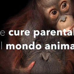 Le cure parentali nel mondo animale. L'eccezionale intervento di Roberto Marchesini al convegno Gis svoltosi il 27-28 Ottobre 2017.
