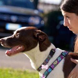 La regola d'oro della comunicazione con il cane. Articolo davvero interessante di A.Vaira