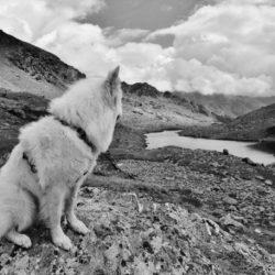 Aree cani: a chi piacciono davvero? Alcuni interessanti spunti di riflessione tratti da un articolo Thinkdog