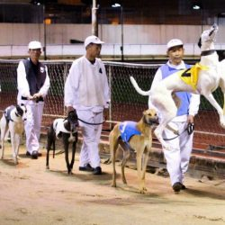 South China Morning Postin 2011 reveals the horrors of Canidrome, i.e. hell on earth.