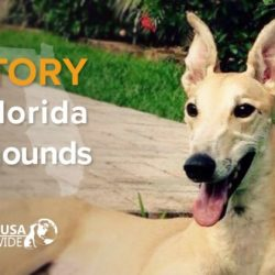 Supportiamo il senatore Lee nella sua proposta di legge per vietare il greyhound racing in Florida