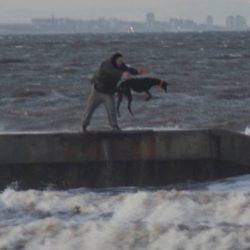 UK – Greyhound gettato ripetutamente in mare per allenarlo alle corse