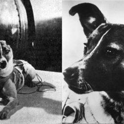 La storia di Laika, la prima cagnetta nello spazio, nelle parole di Dino Buzzati. Da Marchesini Etologia