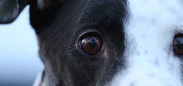 Da parte dei nostri cani