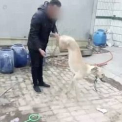 China: Horrifying incident occurred in the Hebel Province