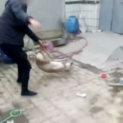 Horrifying moment cruel dog owner beats his greyhound to death for losing money in a dog race